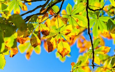 Slowing Down, The Gift Of Autumn