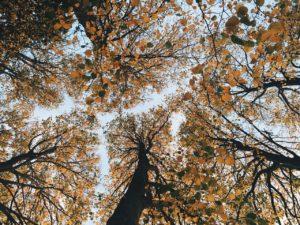 fall-1031242_1280